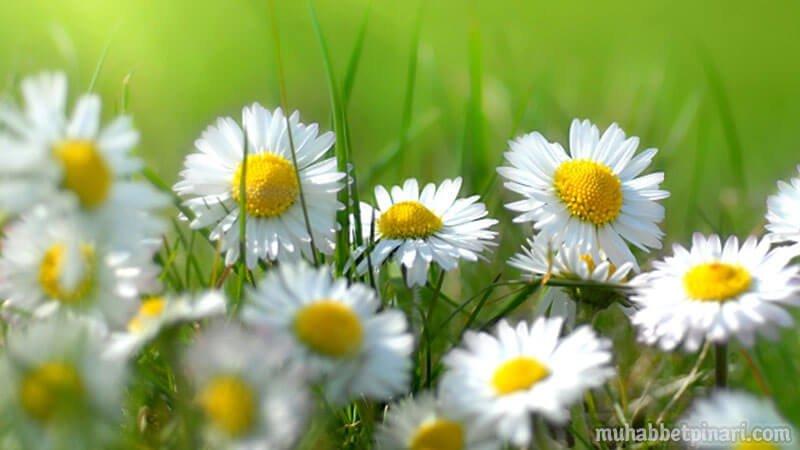 En Güzel Çiçek Demeti
